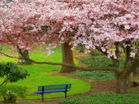 Primavera en Washington