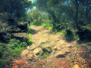 Caminos ricos en vegetación.