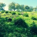 Bello paraje donde abundan los olivos y encinas.