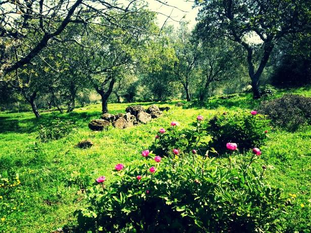 Primavera en la Sierra de Alor