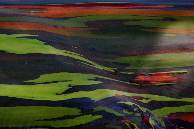eucalipto arcoiris 77