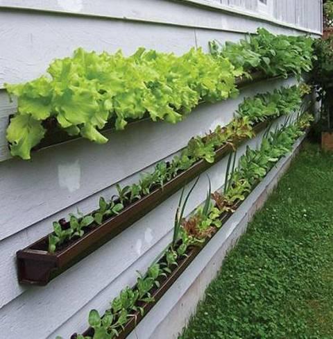 Huerto en casa 5 verduras f ciles de plantar ecolisima for Cultivar vegetales en casa