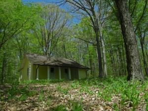 La vida del bosque durante un año desde una ventana