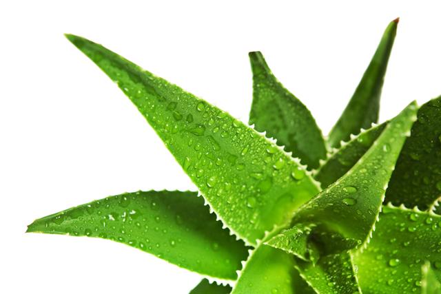 Plantas medicinales que puedes sembrar en tu jard n for 10 plantas ornamentales y para que sirven