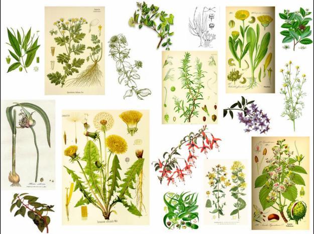 6 plantas medicinales que puedes cultivar en casa for 20 plantas ornamentales