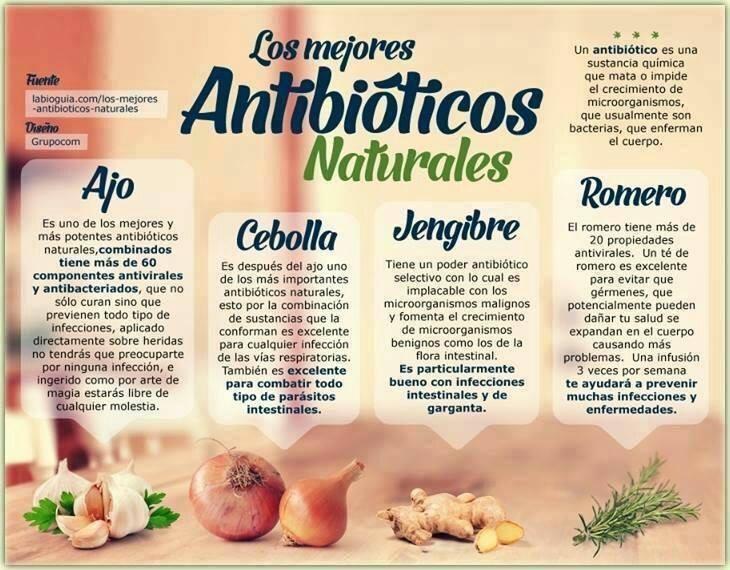 Los 4 mejores antibióticos naturales | Economia – Medio Ambiente ...