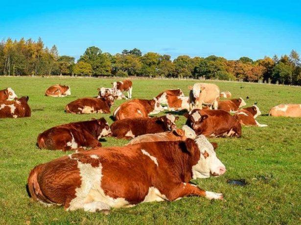 utilizar productos de la ganadería ecológica